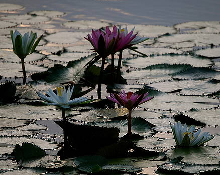 Lillies on the Lake by Kimberly Camacho