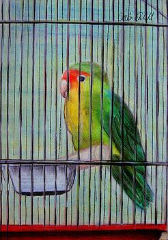 Lillte Birdie by Orla Cahill