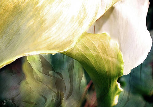 Lilly III by Margaret Hormann Bfa