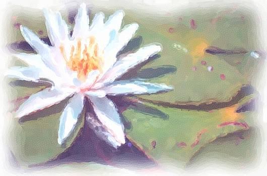 Lilly on Pond by Richard Gordon