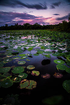 Lilly Pads at White Lake Long Exposure by Micah Goff