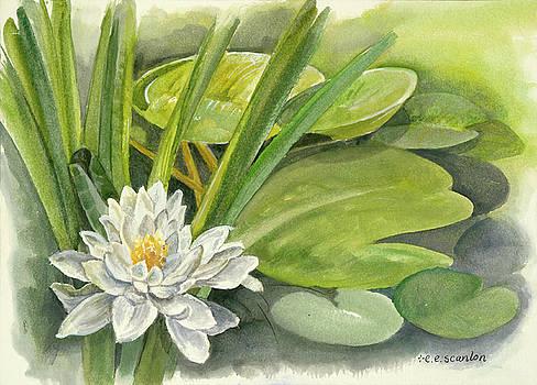 Lilly Pads by E E Scanlon