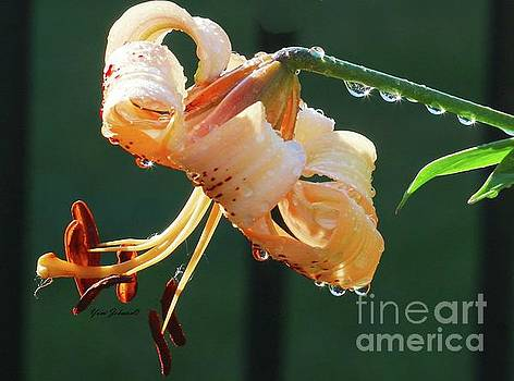 Lilly with droplets by Yumi Johnson