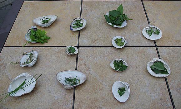 Lilly's Herb Seashore Seashells by Greg Graham