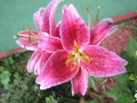 Lily 2 by Joanna Baker - Jenkins