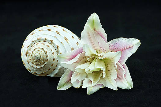 Lily and Shell by Nancy Kirkpatrick