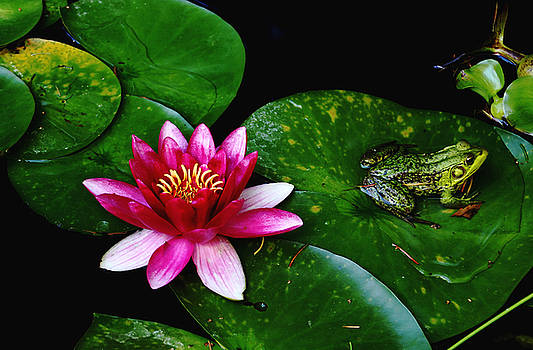 Debbie Oppermann - Lily And The Frog