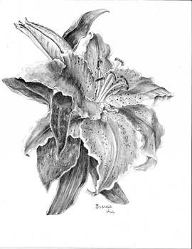 Lily by Brenda Hill