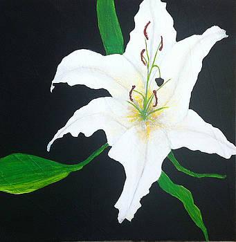 Lily by Elizabeth  Bogard