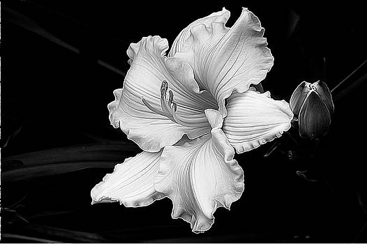 Lily Float by Betsy Zimmerli
