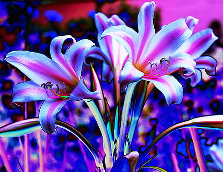 Lily Glow Abstract by M Diane Bonaparte