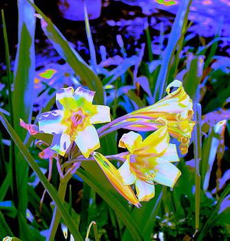 Lily Glow Blue by M Diane Bonaparte
