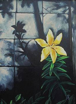 Lily in the Cracks by Carrie Auwaerter