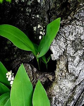 Lily in Tree by M Blaze Wolenski