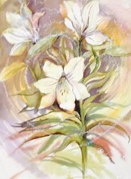 Lily by Judy Osiowy