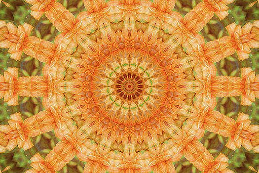 Lily Mandala by Janusian Gallery