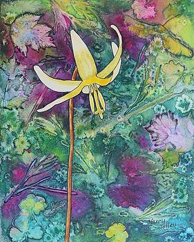 Lily by Nancy Jolley