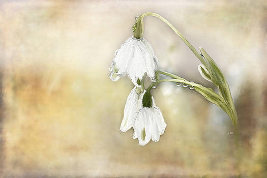 Lily of the Valley by Angela Stanton