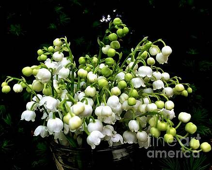 Lily of the Valley by Leea Baltes