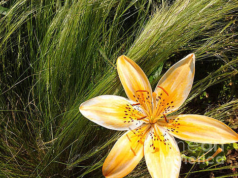 Onedayoneimage Photography - Lily on the Green