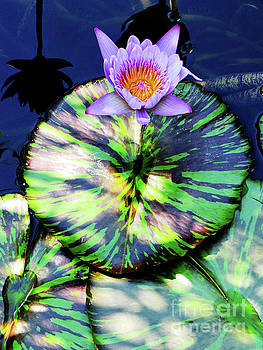 Lily Pad and Lily by Ron Tackett