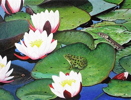 Lily Pad LIfe by Michael Winston