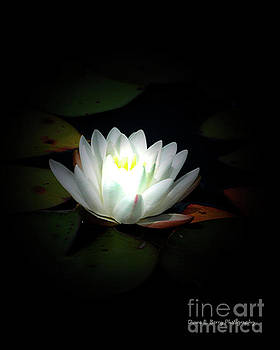 Lily Pad Moonlight by Diane E Berry
