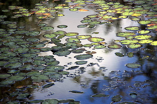 Martina Fagan - Lily Pad Pond