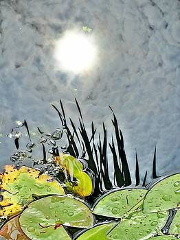 Lily pad Reflection by Lorella Schoales