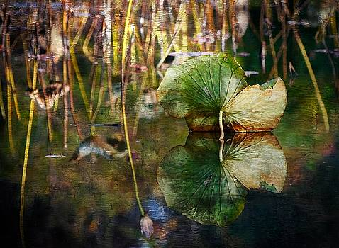 Lily Pad Reflection oil by Scott Fracasso