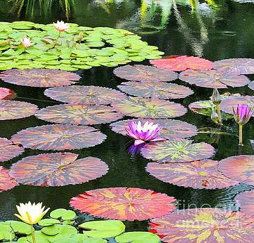 Lily Pads and Parasols by Marcia Breznay