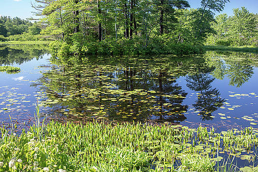 Lily Pads and Reflections by Morgain Bailey