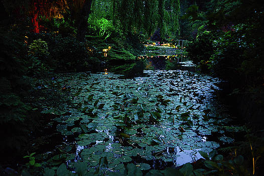 Lily pads at night by Michael Bessler