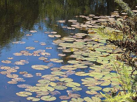 Lily Pads by Denise Lowery