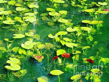 Lily Pads by Melissa Stoudt