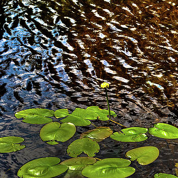 Lily Pads on First Lake by David Patterson