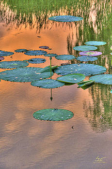 Sam Davis Johnson - Lily pads
