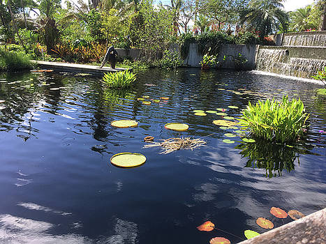 Lily  Pads with the Sky Reflecting in the Pond #1 by Susan Grunin