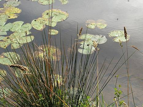 Lily Pond by Denise Lowery