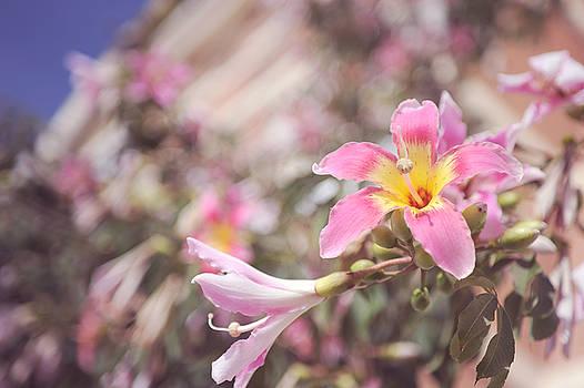 Jenny Rainbow - Lily Tree. Flowers of Malaga