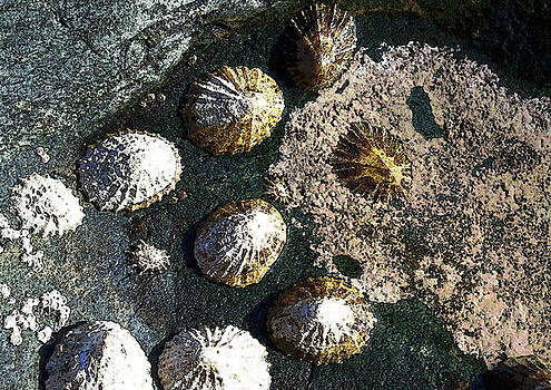 Limpets by Julian Perry