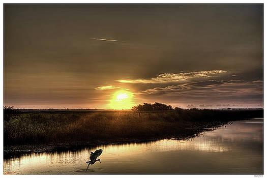 Limpkin Sunrise by Rogermike Wilson