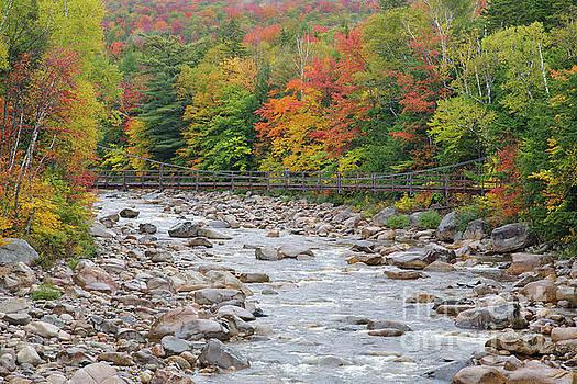 Erin Paul Donovan - Lincoln Woods Suspension Bridge - Lincoln, New Hampshire