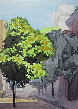 Linden Tree in New York City by Bethany Lee