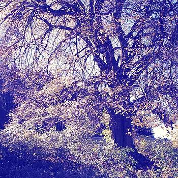 Linden tree by Roman Aj