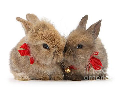 Lindt Bunnies by Warren Photographic