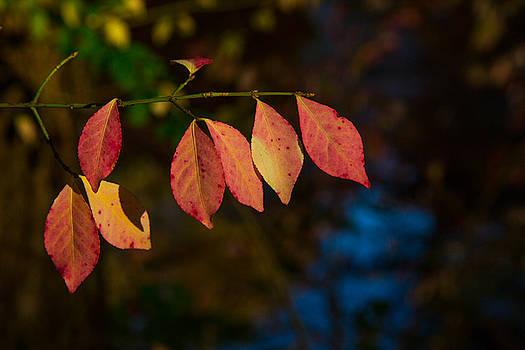Karol Livote - Line Of Leaves
