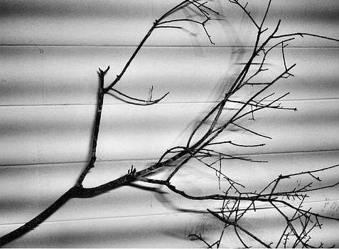 Lines and Shadows by Phil Penne