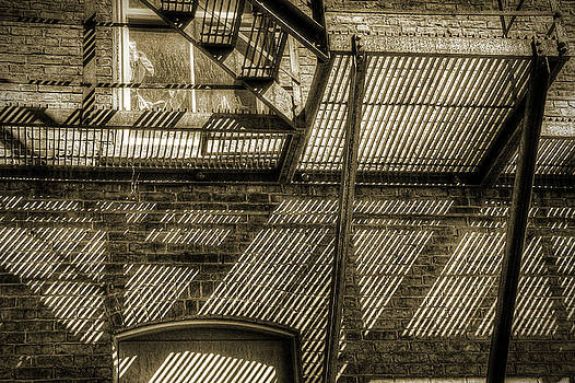 Lines by Betsy Zimmerli