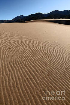 Lines in the Sand by Betty Morgan